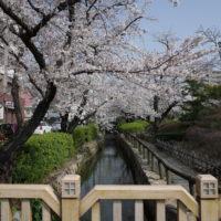 山、桜、レンタルスペース